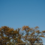Humboldt Park - Big sky, a tree and some birds