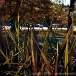 Humboldt Park - Stalks in the formal garden